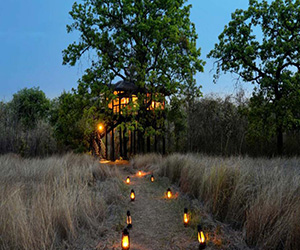 /images/wild-life/6-night-7-days-nagpur-bhopal/pench-tree-lodge/1.jpg